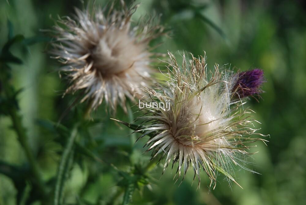 Unusual Flower by bunnij