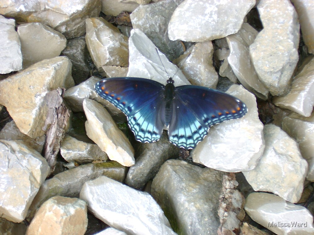 Butterfly in the rocks by MelissaWard