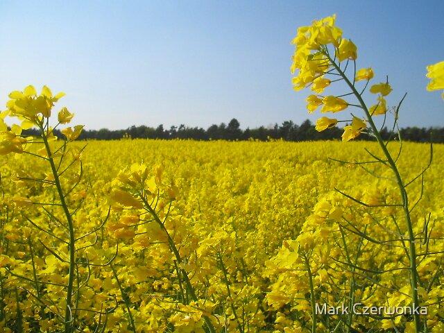 Field of Yellow by Mark Czerwonka
