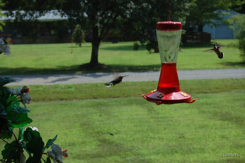 Humming Birds In Motion by steelers