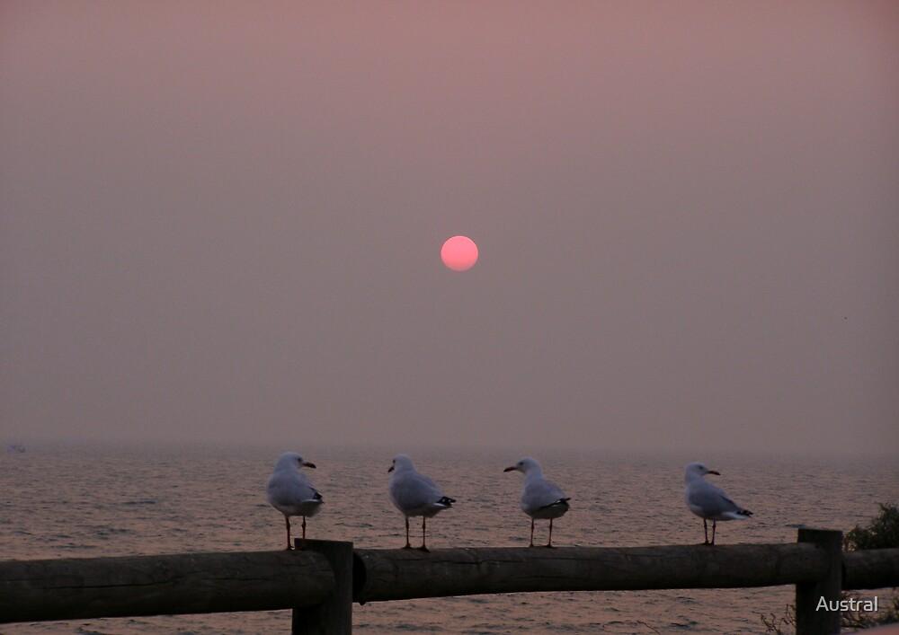 Bushfire Sunset by Austral