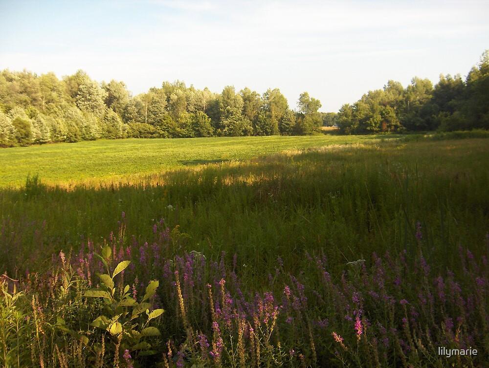 My field of dreams by lilymarie