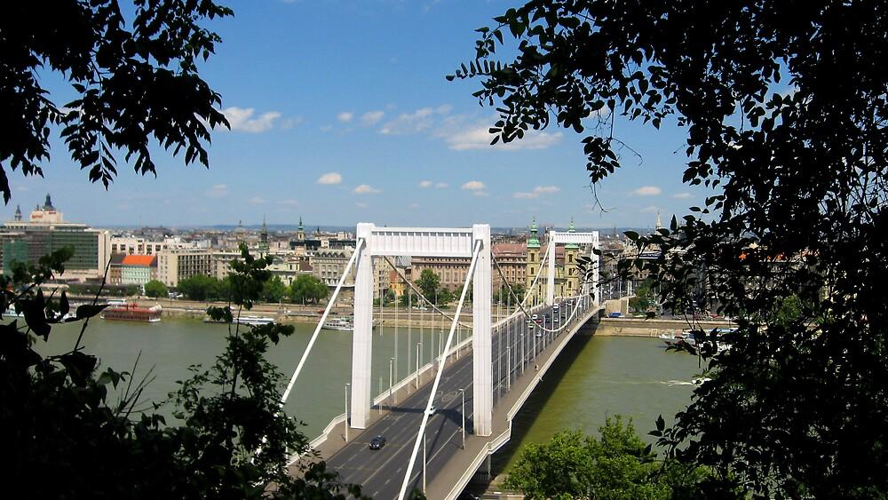 Elizabeth Bridge in Budapest by chartling