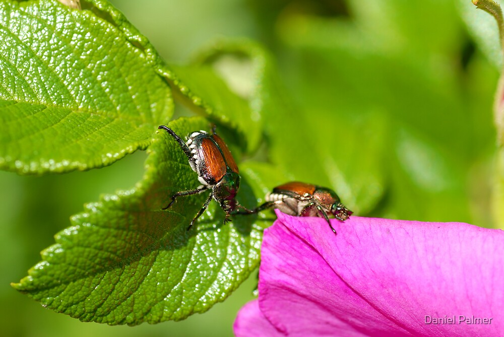Bug Pair Moving To The Flower by Daniel Palmer