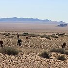 Wild horses of the Namib by poohsmate