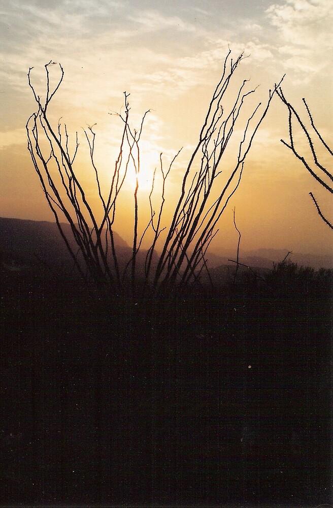 desert sunset by candie ernst