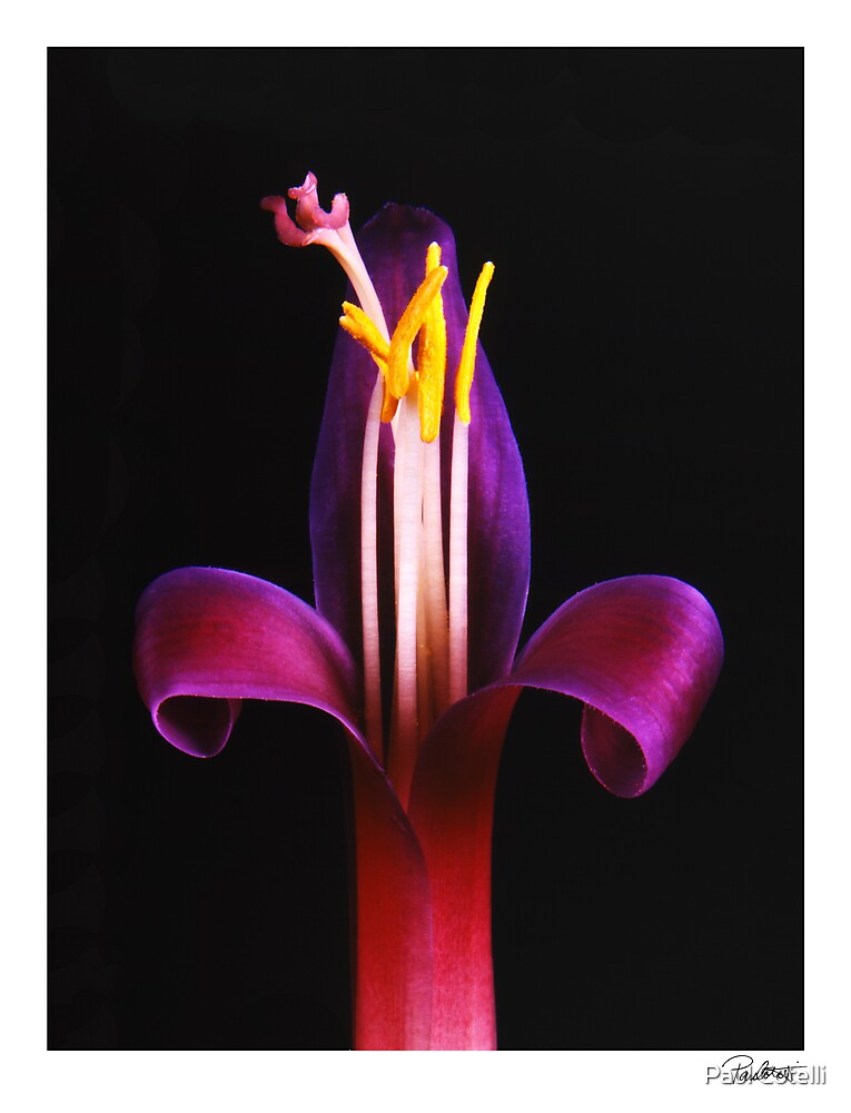 "'Purple Bromelaide' from the series""Inner Bloom"" by Paul Cotelli"