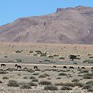 Wild horses of the Namib. by poohsmate