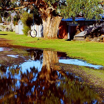 Tree Reflection by xavier