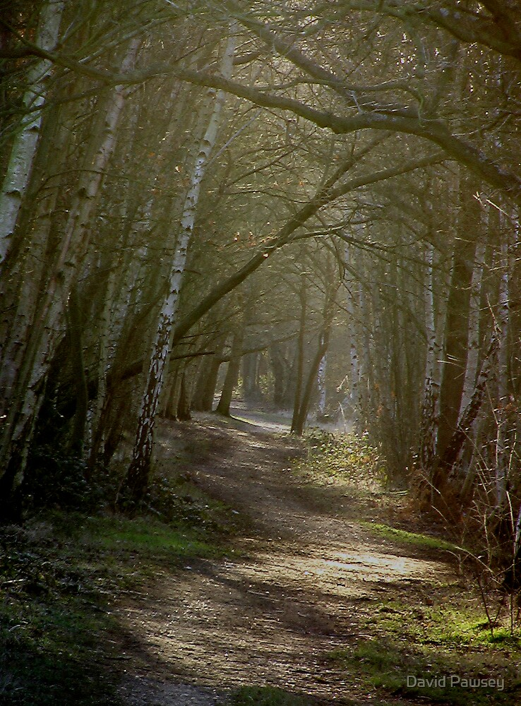 Run, Forest by David Pawsey