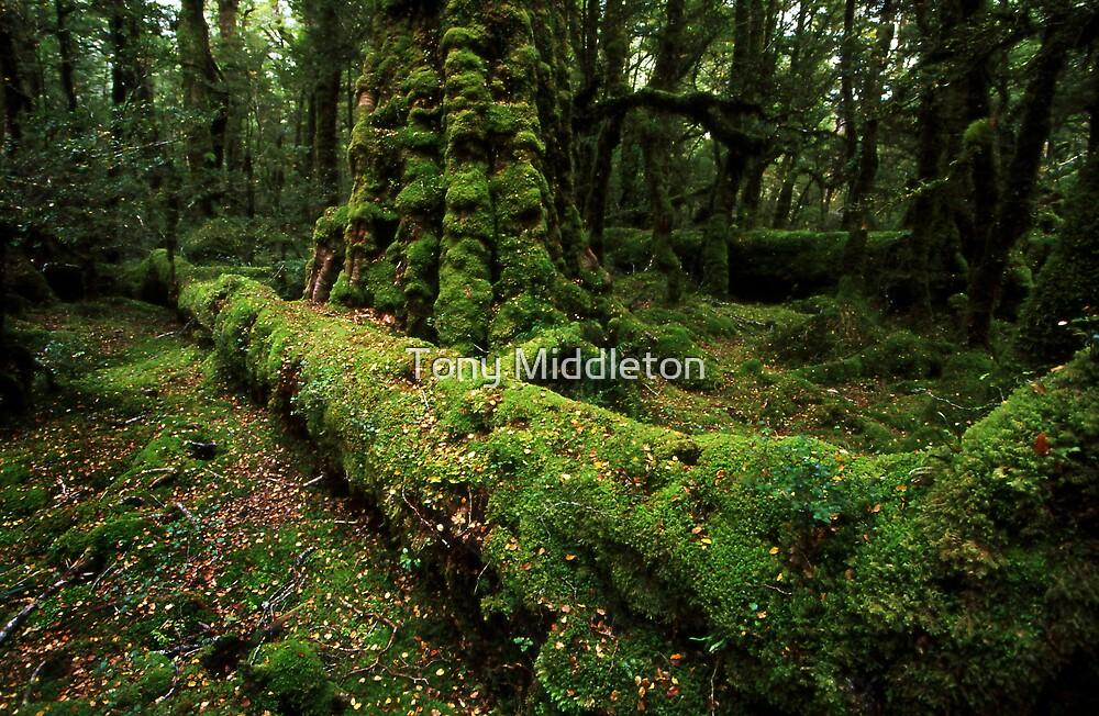 Fiordland forest - NZ by Tony Middleton