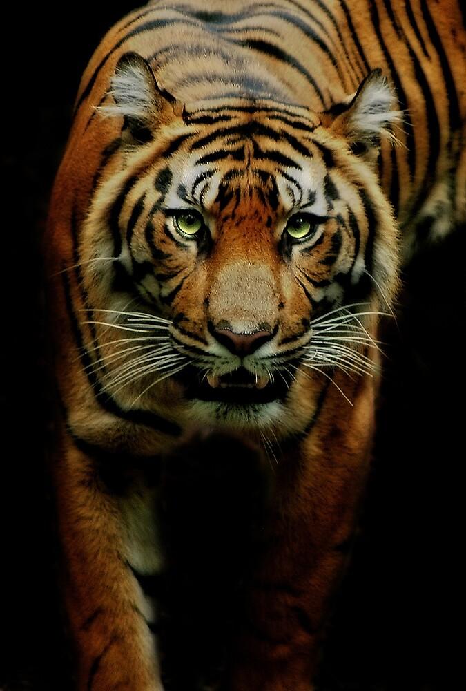 Hunter by Natalie Manuel