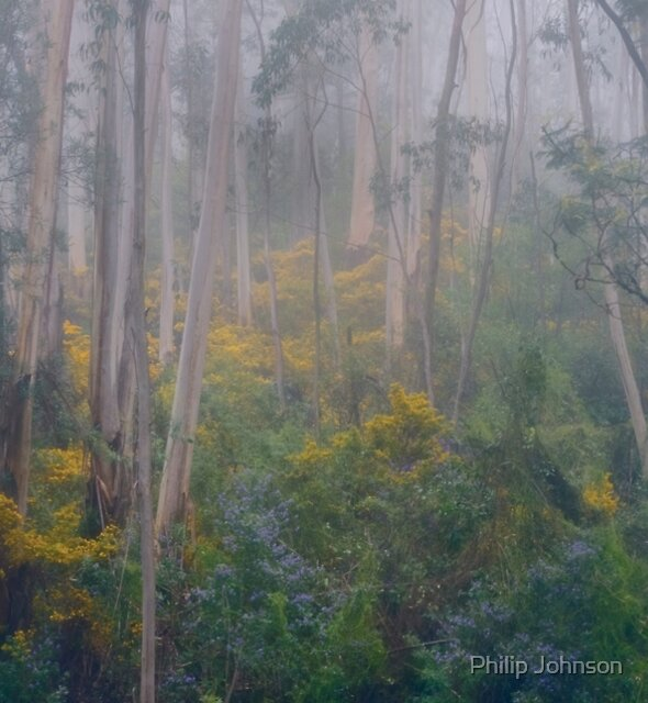 Experiments in Processing # 4 - Mount Wilson NSW - The HDR Experience by Philip Johnson