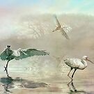 Spoonbill morning by Brian Tarr