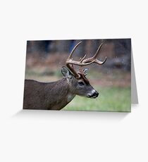 Snow Falling On A White-Tailed Deer Greeting Card