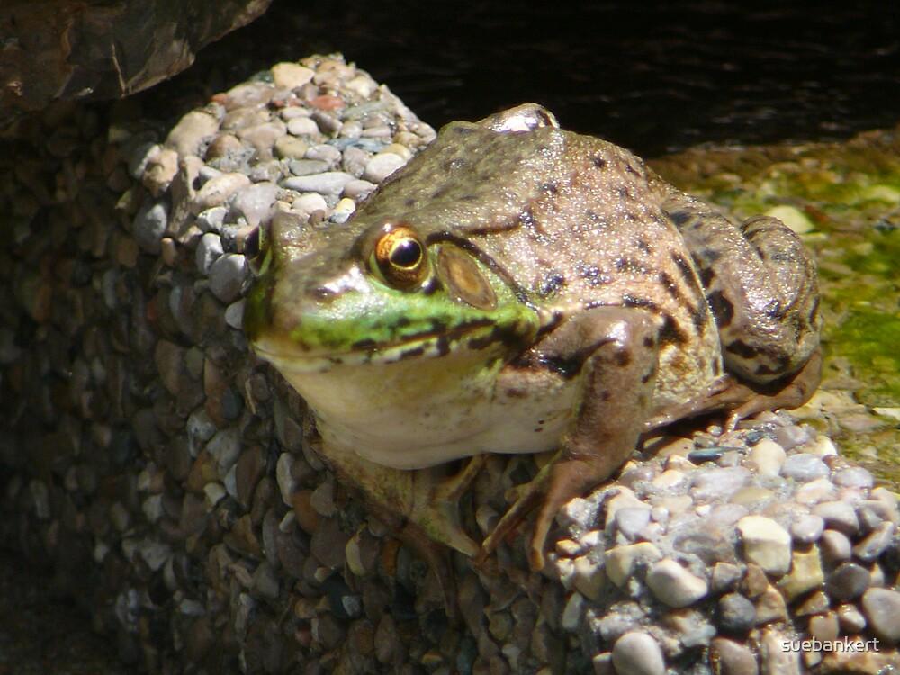 Frog by suebankert