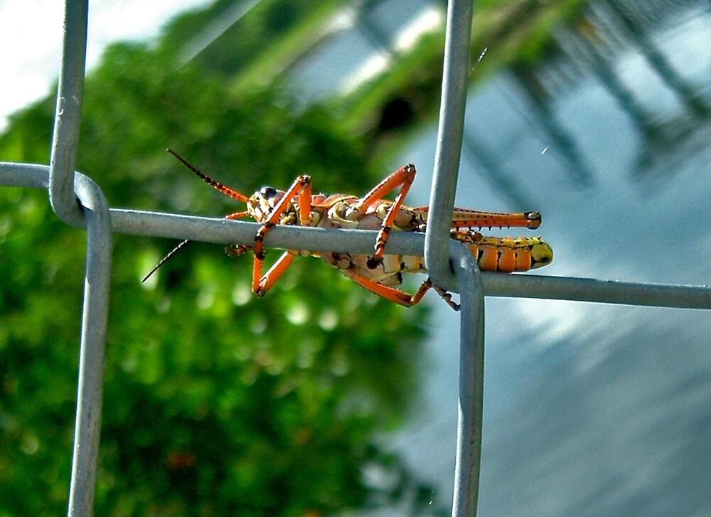 Grasshopper by Erika Benoit