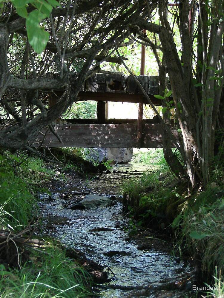 Peaceful waters... by Brandee