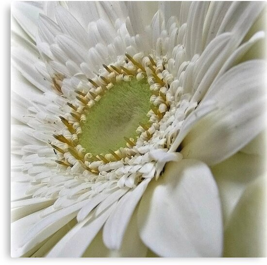 ~ Purity ~ by Brenda Boisvert