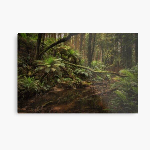 Redwoods, Otways, Victoria Metal Print