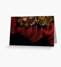Feather Star Greeting Card