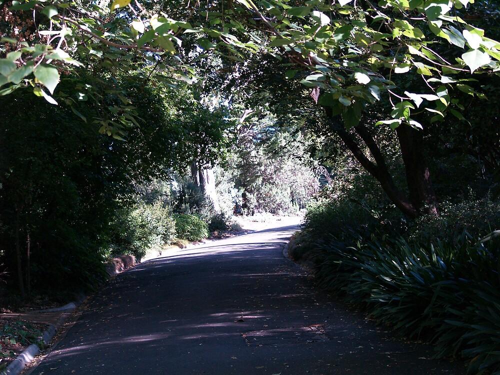 Botanical Garden Path by wildflowers