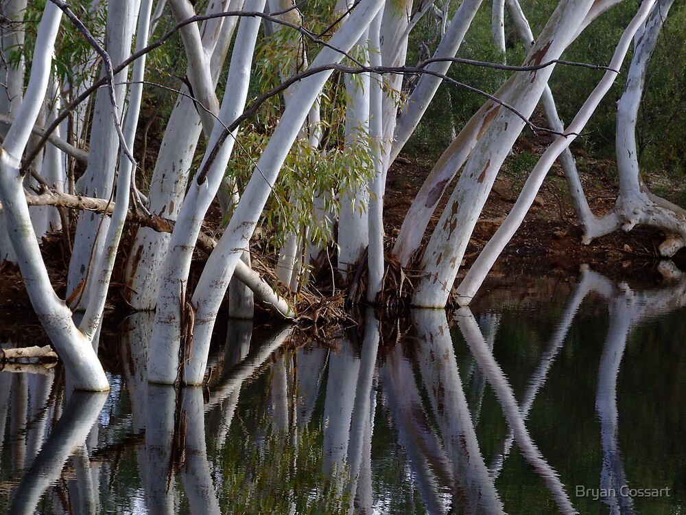 White Gums by Bryan Cossart