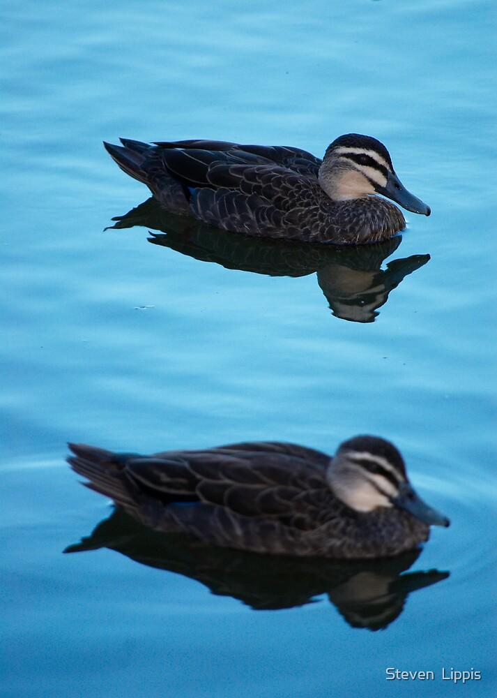 Double Duck by Steven  Lippis