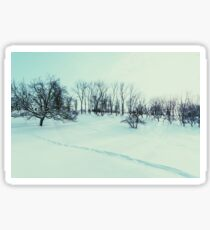 Winter Landscape With Snow And Trees After Blizzard Sticker