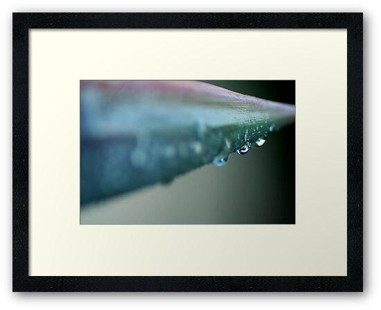 Dew  by Taylor Jury