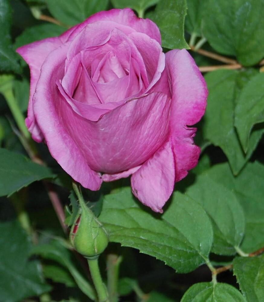 In Bloom by llurdh