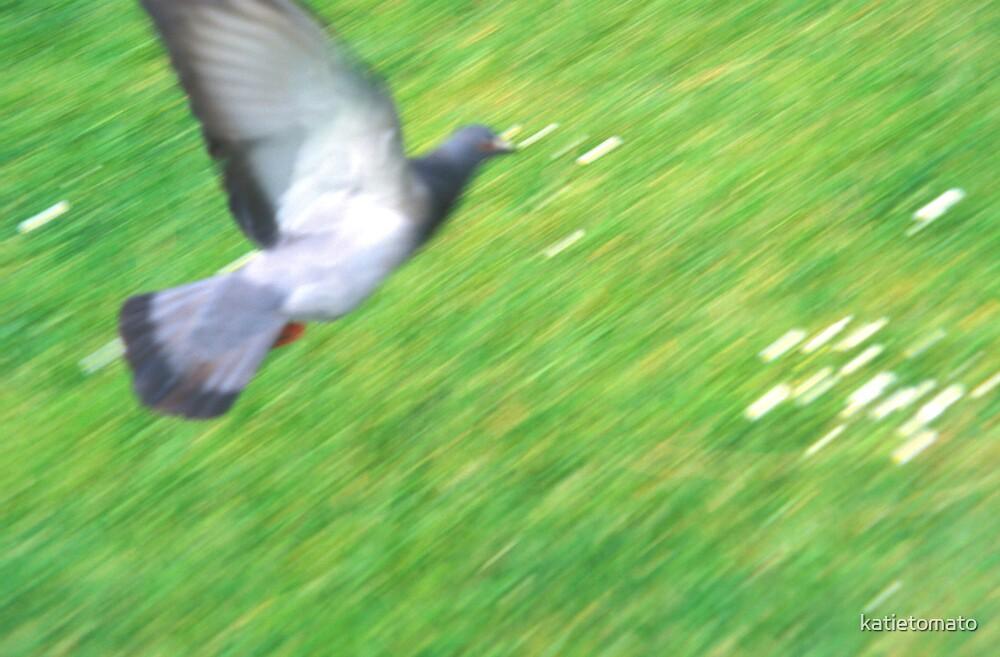 Pigeon by katietomato