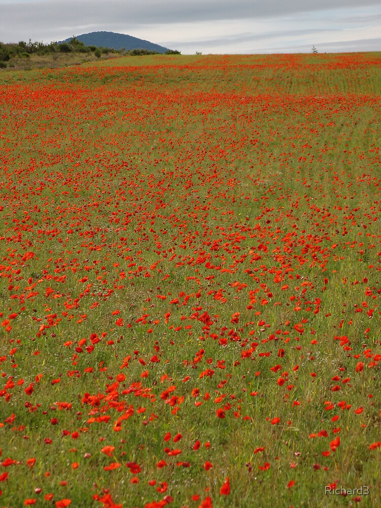 Poppy Fields by Richard3