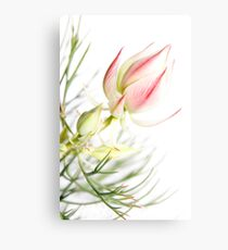 Protea sugar and spice Canvas Print