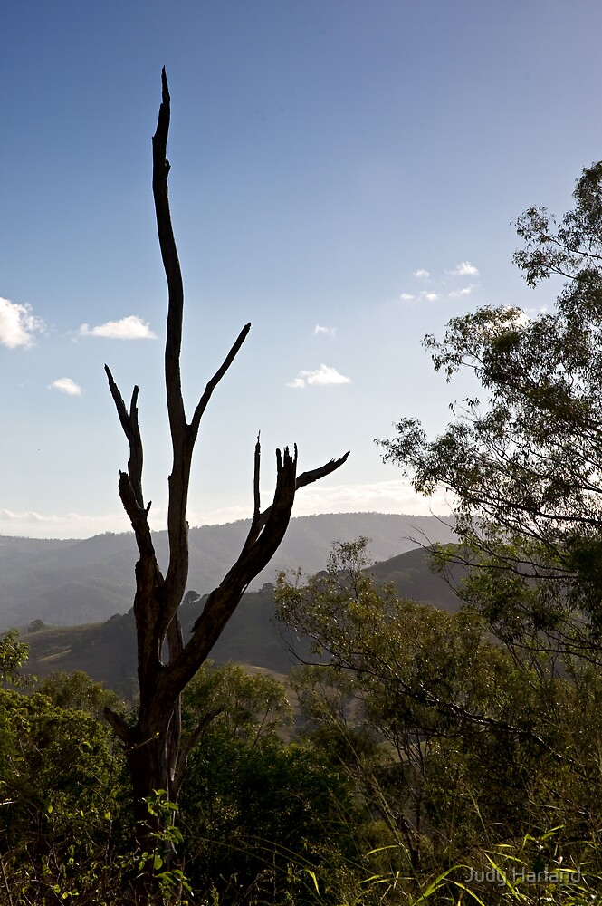 Dayboro, Queensland by Judy Harland