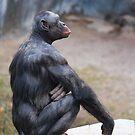Bonobo by Bob Hardy