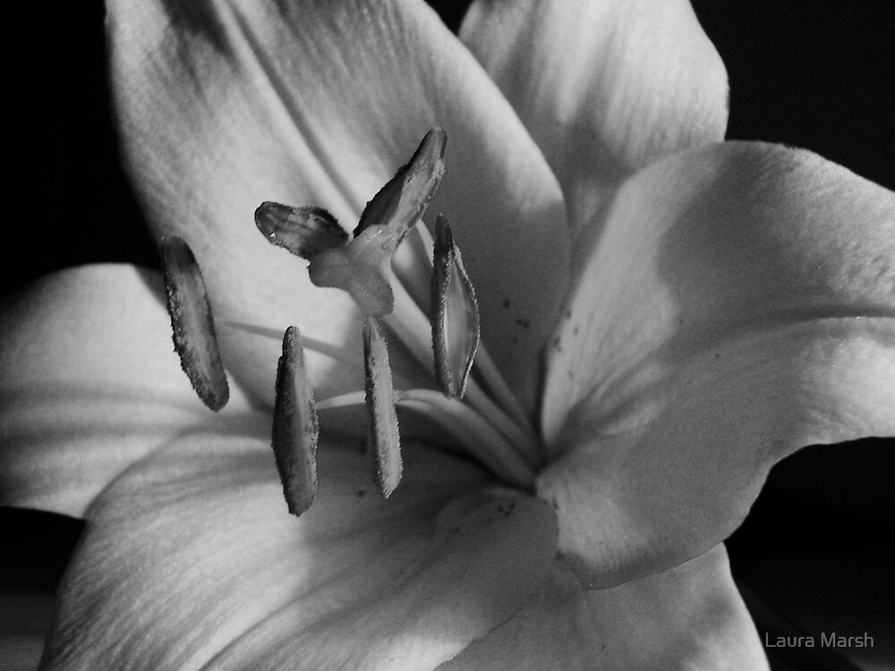 Lilly in Black & White by Laura Marsh