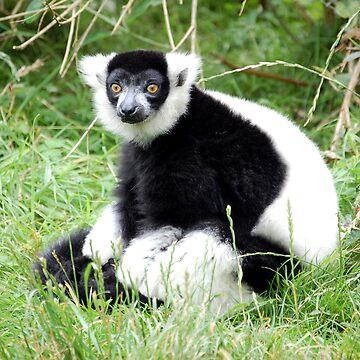 Lemur by dozzie