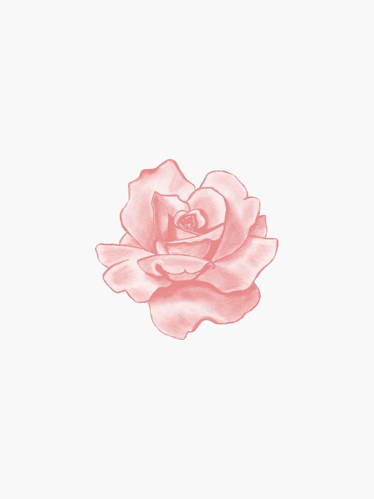 pink rose  by emilyweis1001