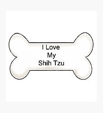 Shih Tzu Photographic Print