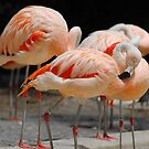 Flamingo by John Leeman