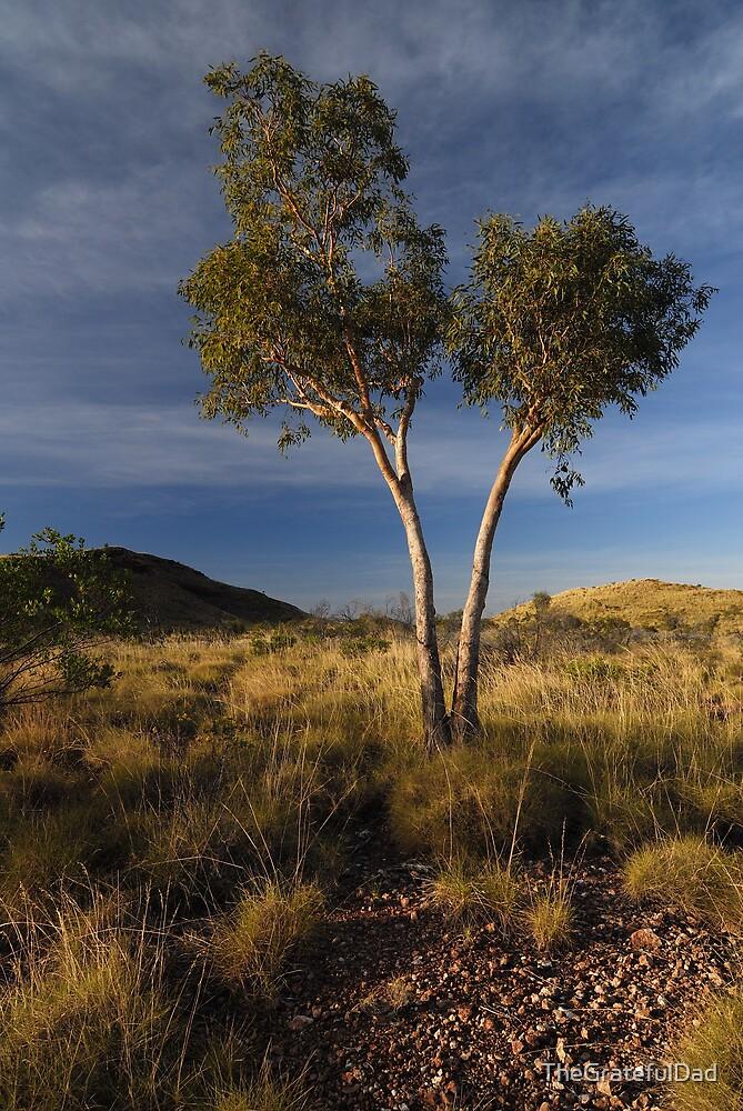 Pilbara Gold by TheGratefulDad