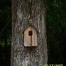 Bird House by daphnemg