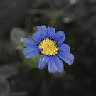Little Blue Flower by Danita Hickson