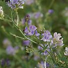 Clovers in Lilac by Danita Hickson