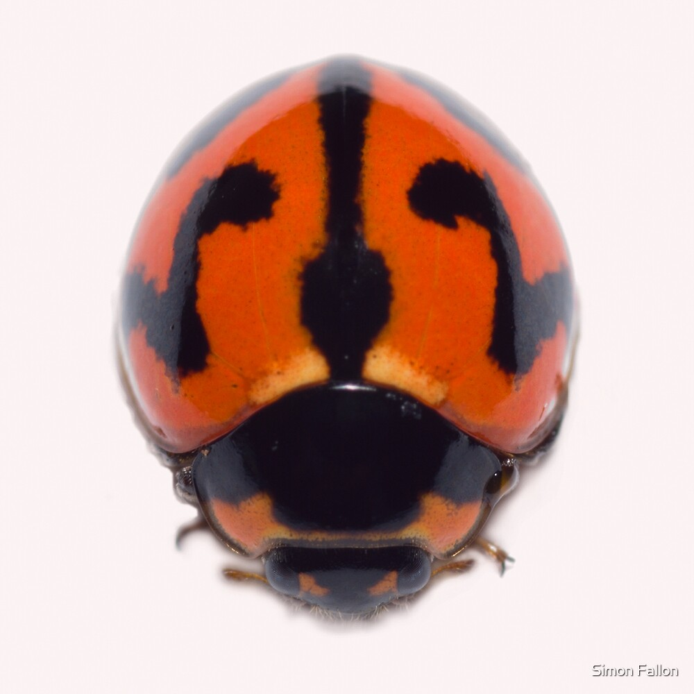 Ladybird from Above by Simon Fallon