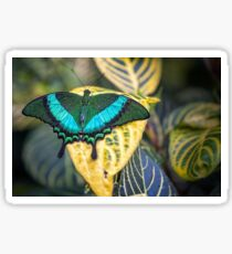 Emerald Peacock Sticker