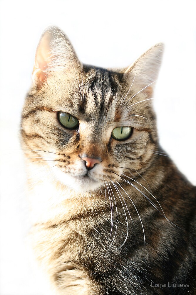 Bengal Cat Portrait by LunarLioness