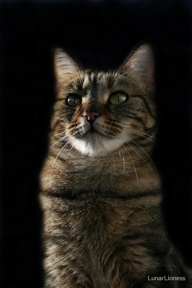 Elegant Cat Portrait by LunarLioness