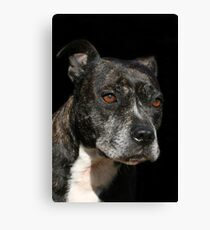 Staffordshire Bull Terrier Portrait Canvas Print